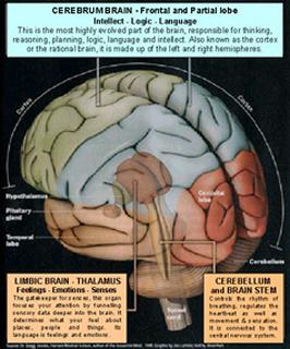 brain320h